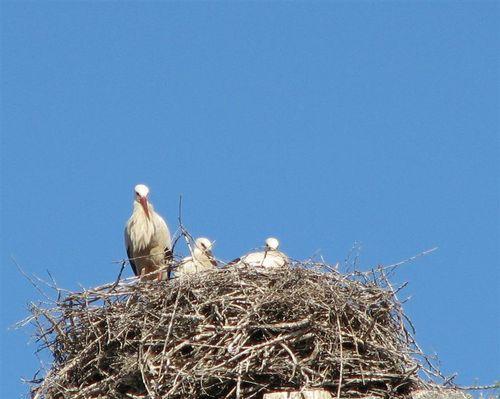 Storks Bearing Storks?